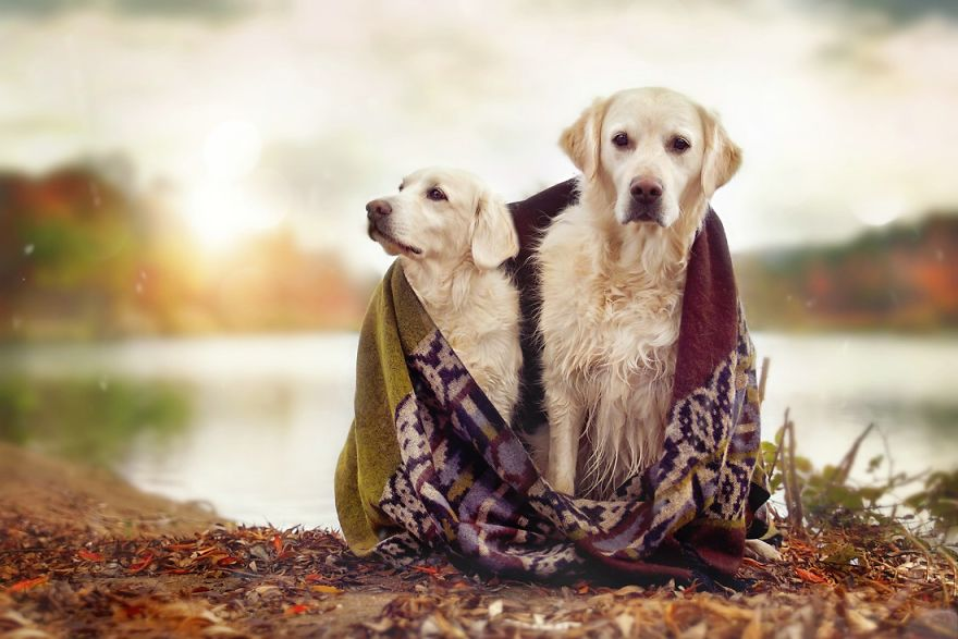 yes-dogs-also-have-best-friends-i-want-to-show-you-the-friends-of-my-golden-retriever-mali-8__880