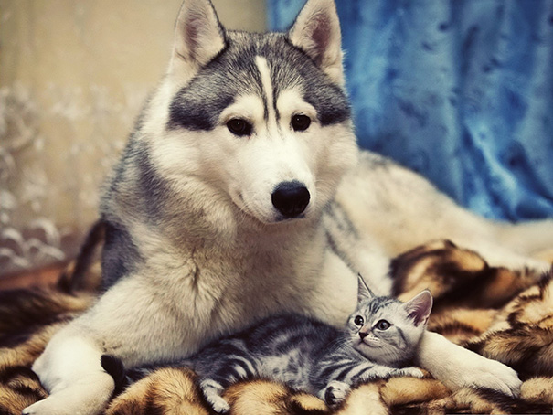 XX-Cats-And-Dogs-Getting-Along-12__605