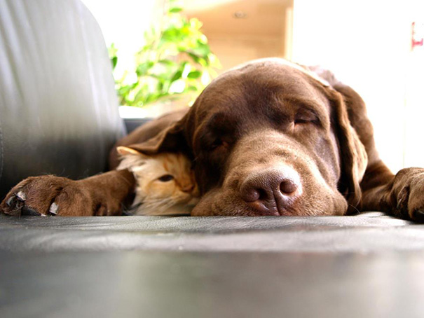 XX-Cats-And-Dogs-Getting-Along-13__605
