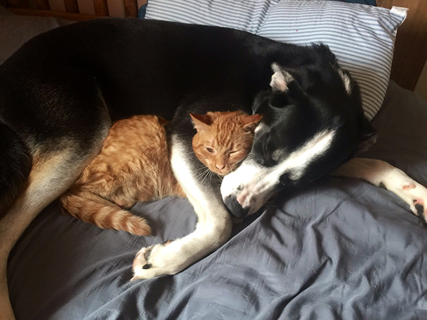 XX-Cats-And-Dogs-Getting-Along-14__605