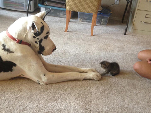 XX-Cats-And-Dogs-Getting-Along-1__605