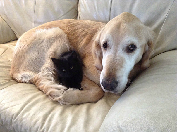 XX-Cats-And-Dogs-Getting-Along-7__605