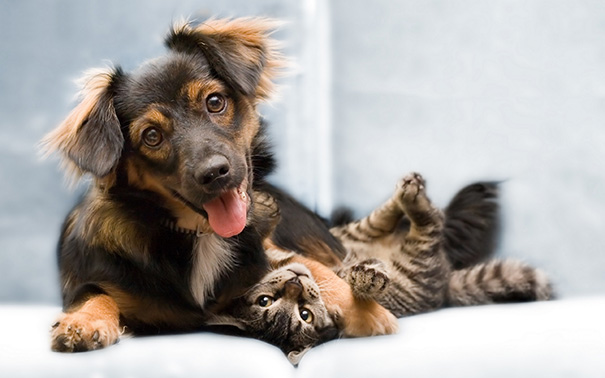 XX-Cats-And-Dogs-Getting-Along-8__605