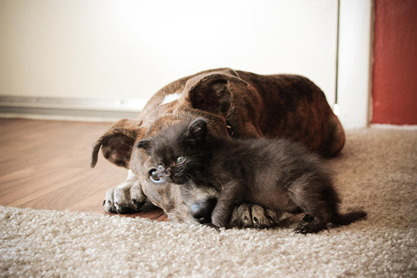 XX-Cats-And-Dogs-Getting-Along-9__605
