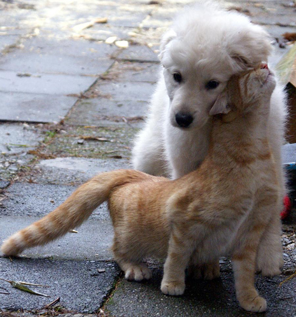 cats-and-dogs-getting-along-28__605