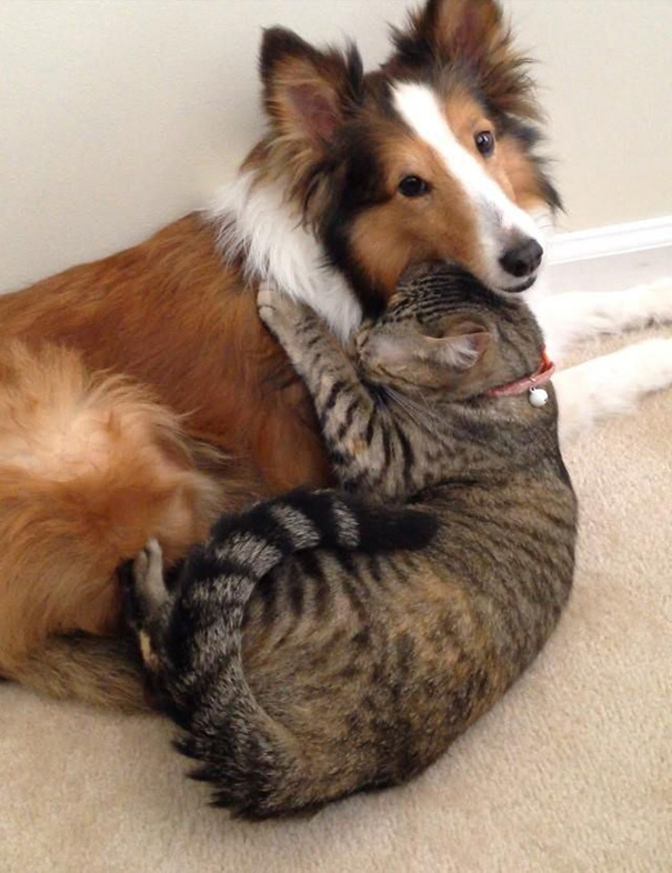 cats-and-dogs-getting-along-291__605