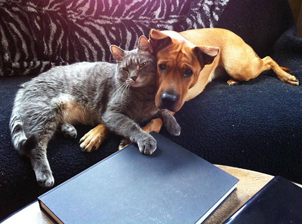 cats-and-dogs-getting-along-30__605