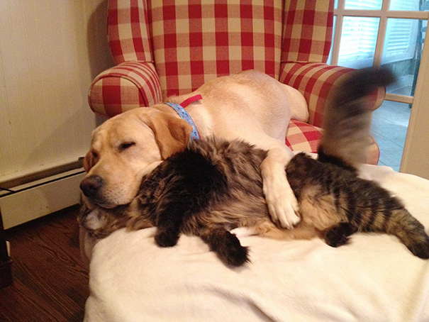 cats-and-dogs-getting-along-31__605