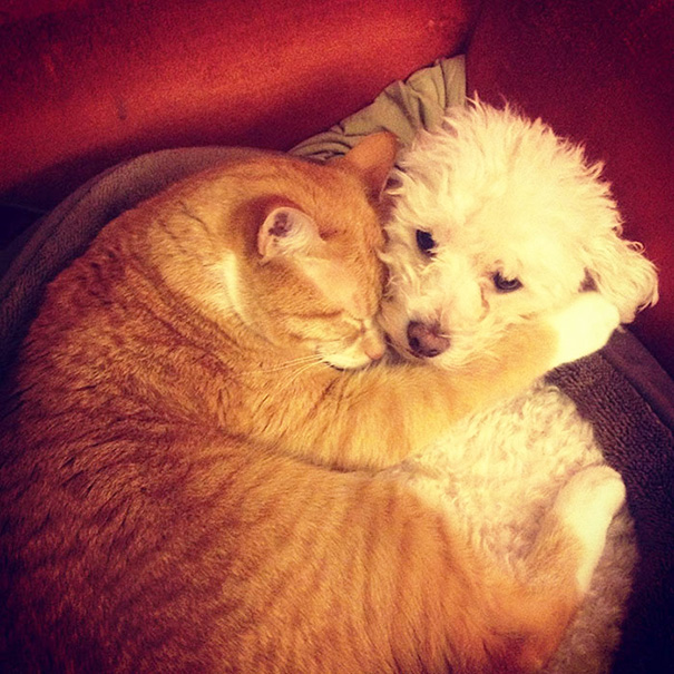 cats-and-dogs-getting-along-34__605