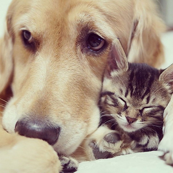 cats-and-dogs-getting-along-39__605