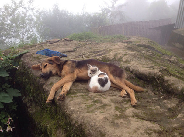 cats-and-dogs-getting-along-3__605