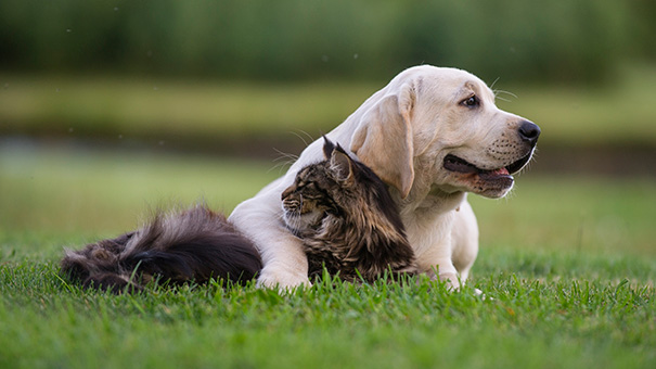 cats-and-dogs-getting-along-46__605