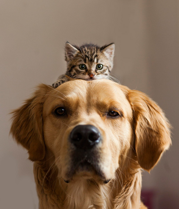 cats-and-dogs-getting-along-47__605