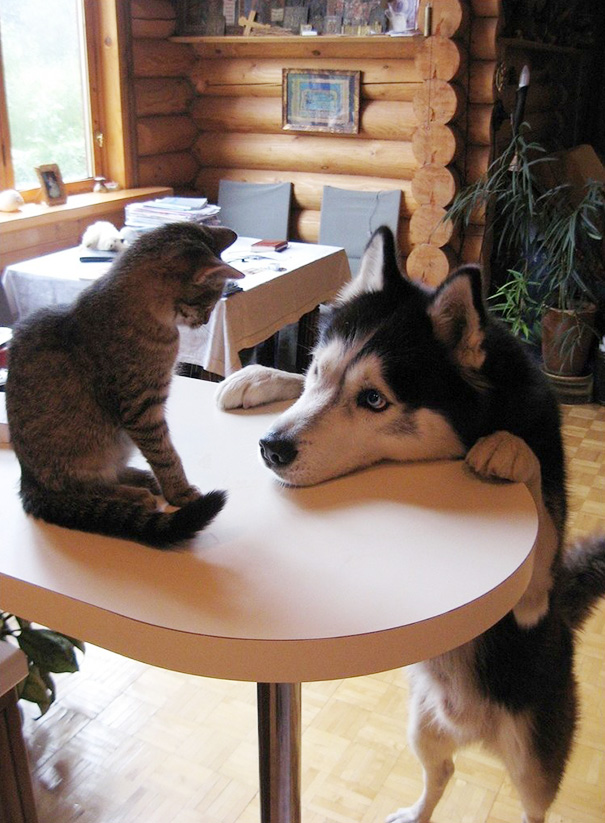 cats-and-dogs-getting-along-52__605