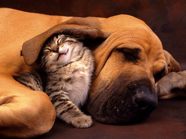 cats-and-dogs-getting-along-53__605