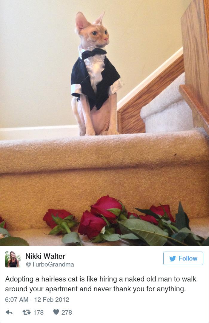 funny-cat-tweets-1110__700