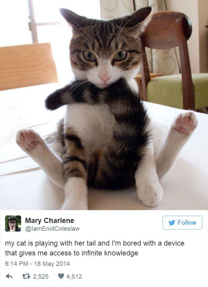 funny-cat-tweets-1311__700