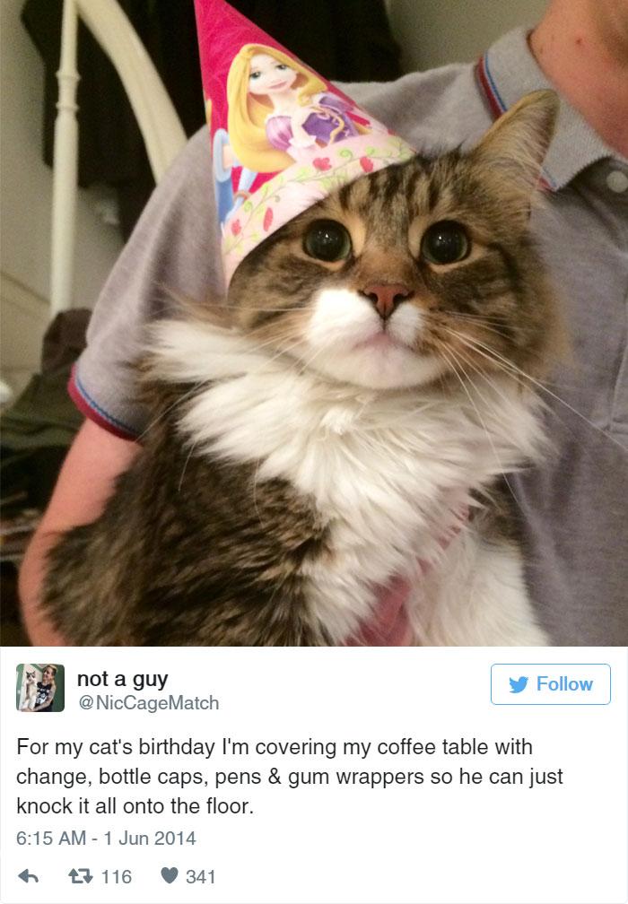 funny-cat-tweets-1610__700