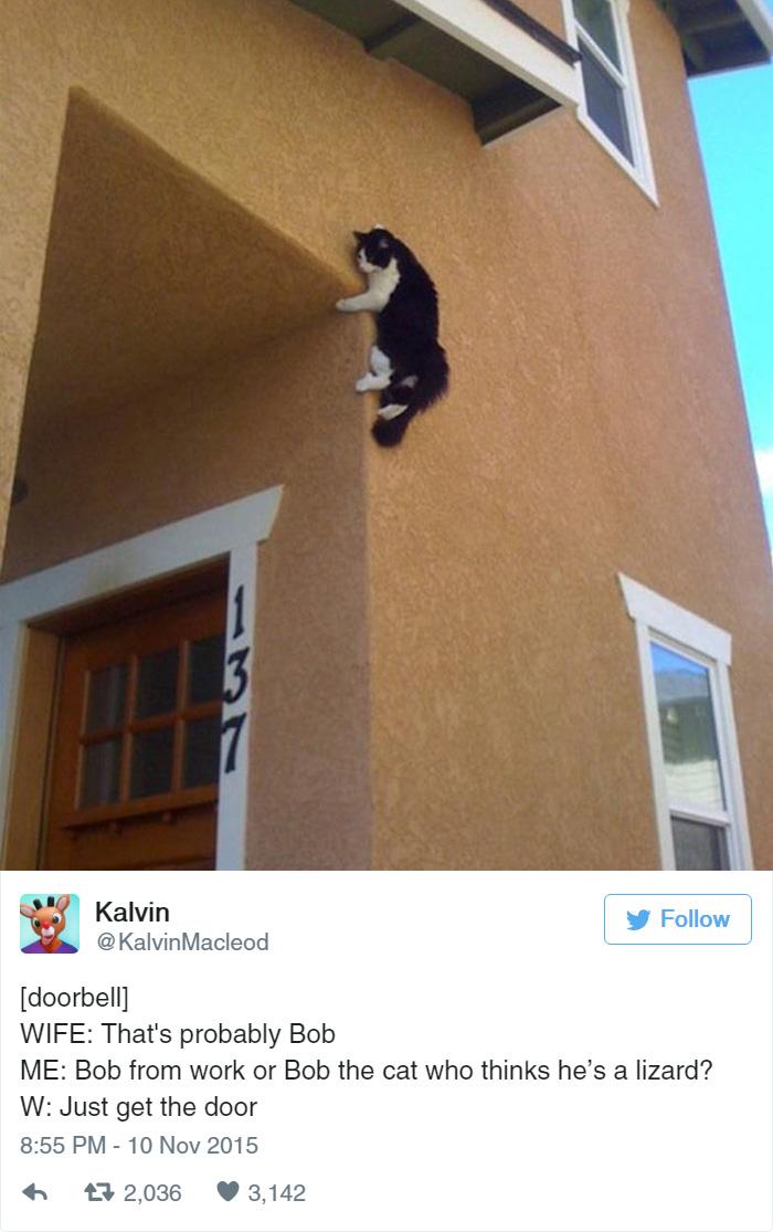 funny-cat-tweets-1710__700