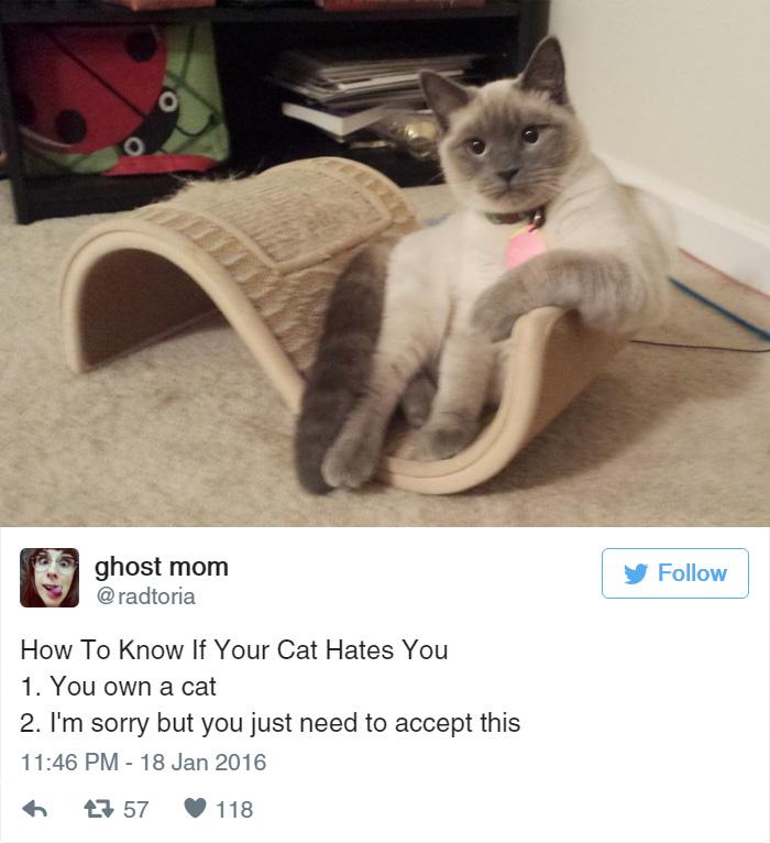 funny-cat-tweets-1711__700