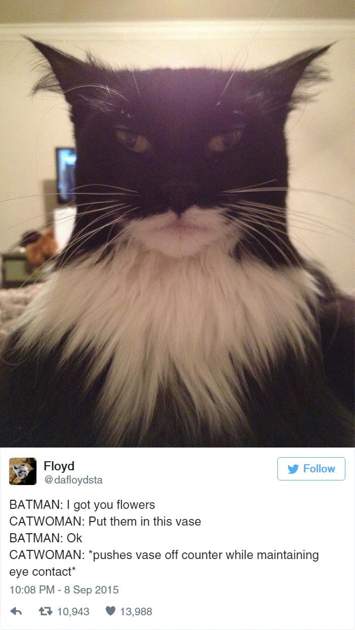 funny-cat-tweets-209__700