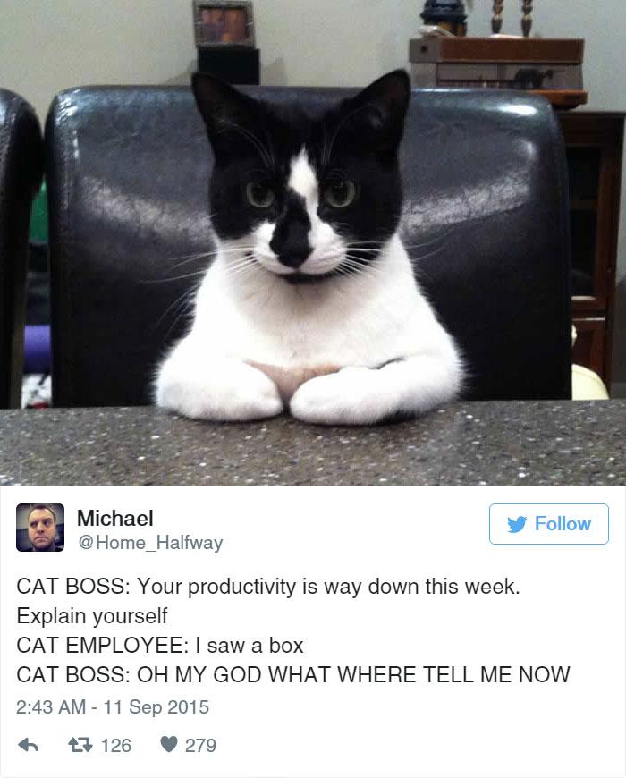 funny-cat-tweets-221__700
