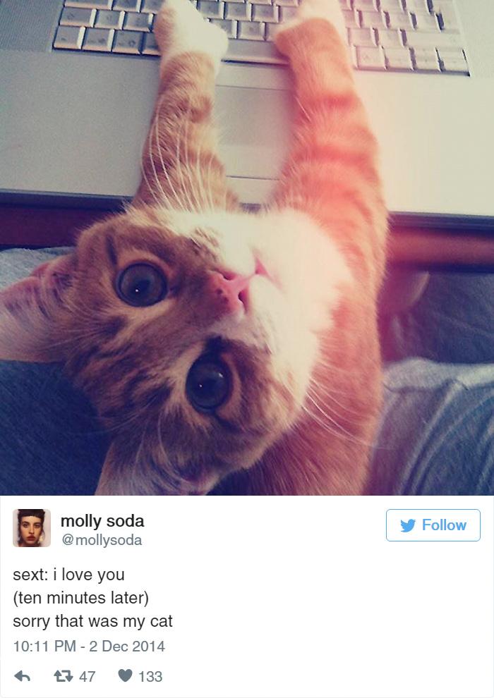 funny-cat-tweets-261__700