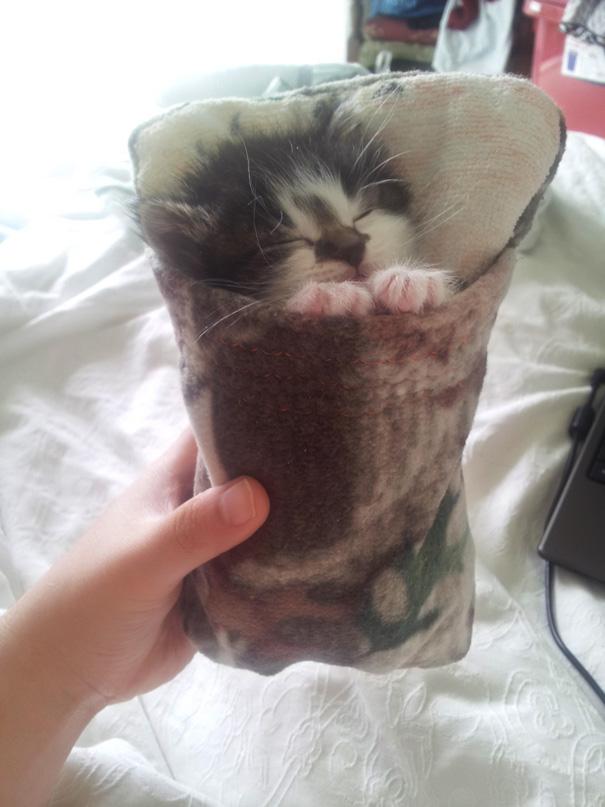 sleeping-kitties-2__605