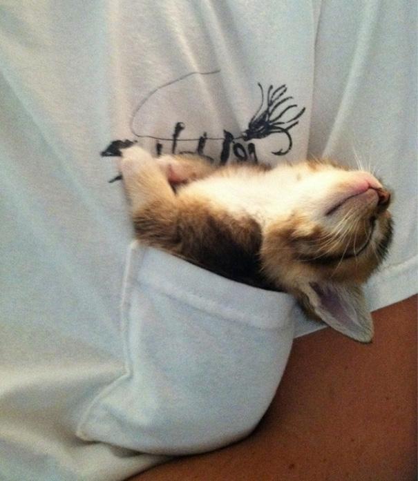 sleeping-kitties-30__605