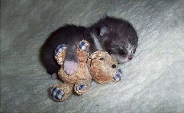 sleeping-kitties-47__605