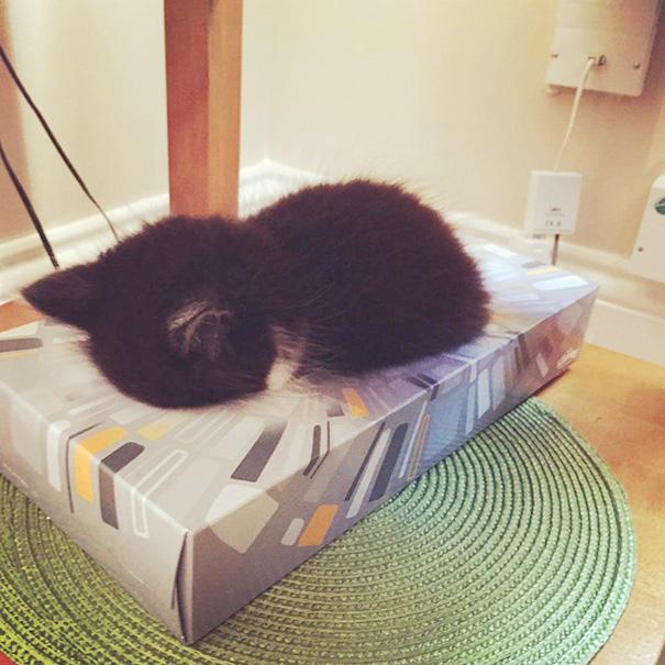 sleeping-kitties-48__605