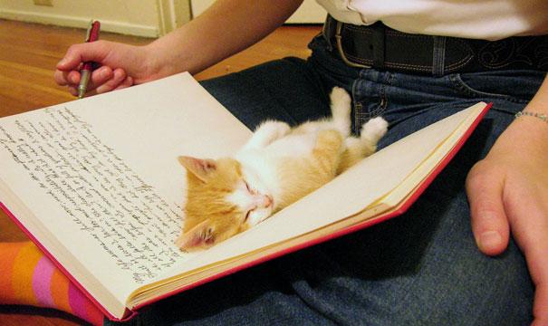 sleeping-kitty-23__605