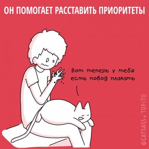 1455107026_koshki-i-rasstavanie-5