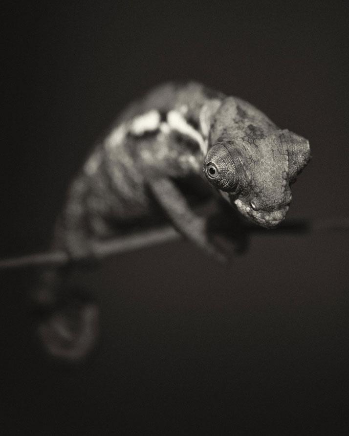 1a_Animal_Portraits__vincent_Lagrange_yatzer