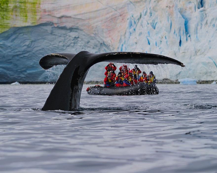 Humpback Whale Shows Its Fluke