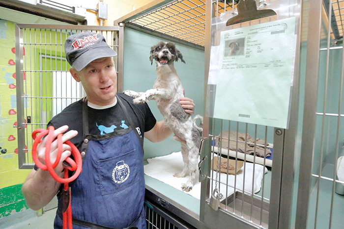 barber-gives-free-haircuts-shelter-dogs-mark-imhof-3