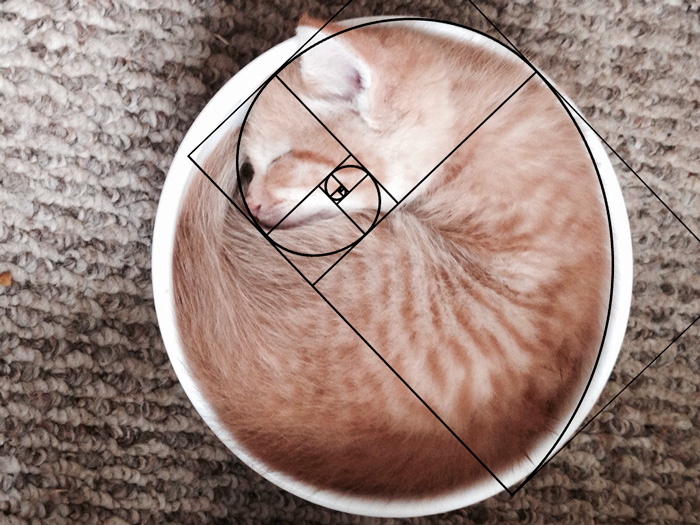 fibonacci-composition-cats-furbonacci-101__700
