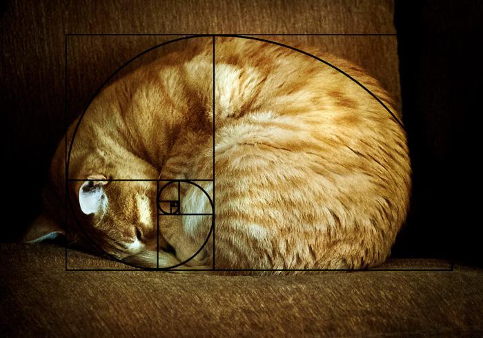 fibonacci-composition-cats-furbonacci-72__700