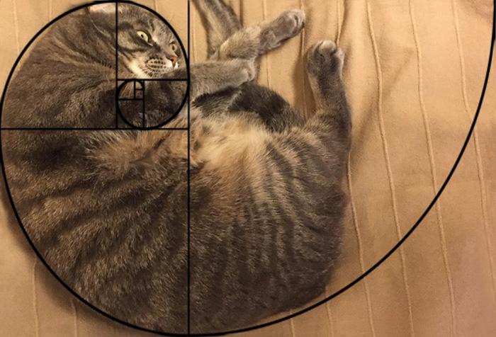 fibonacci-composition-cats-furbonacci-82