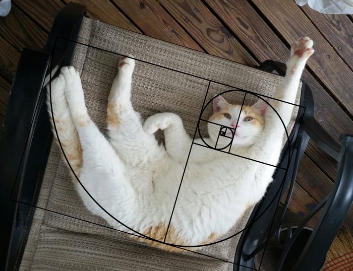 fibonacci-composition-cats-furbonacci-91__700