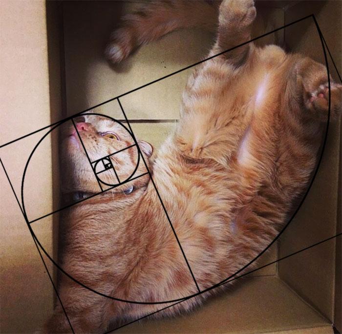 fibonacci-composition-cats-furbonacci-url-4__700