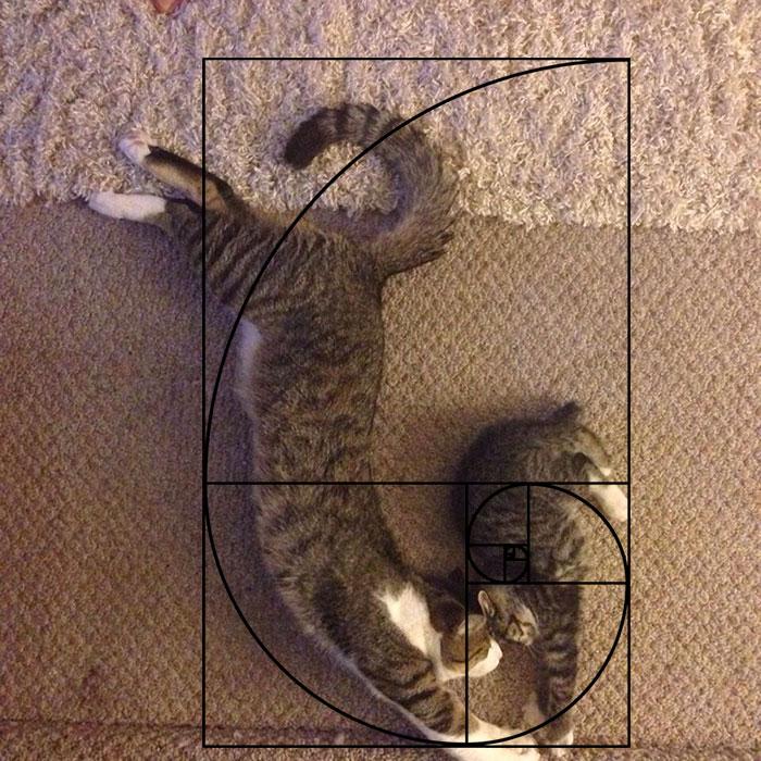 fibonacci-composition-cats-furbonacci-url-6__700