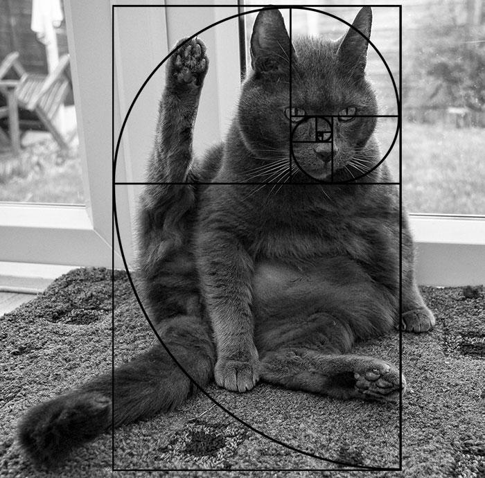 fibonacci-composition-cats-furbonacci-url-8__700