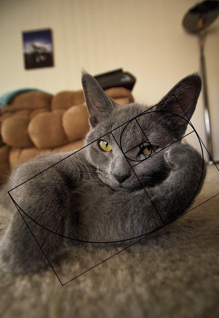 fibonacci-composition-cats-furbonacci__700