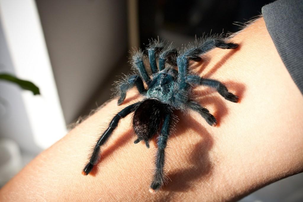 spider-629902_1280