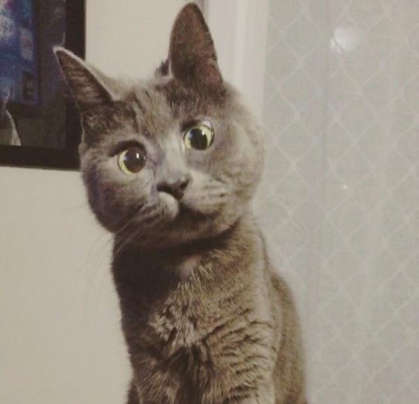 Кот удивляется фото