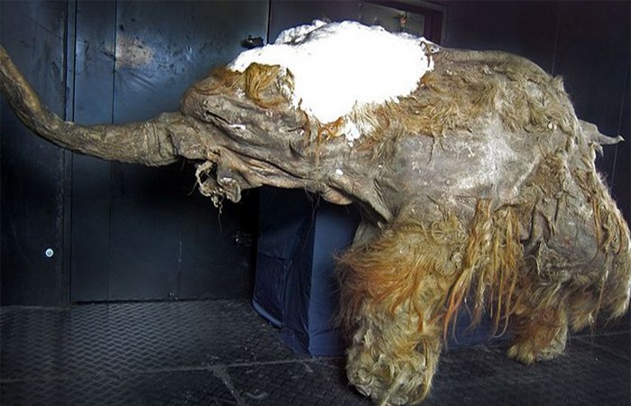 mummies-09