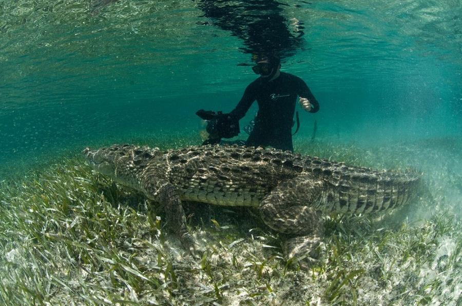 krokodilami-progulka-podvodnaya-eto-interesno-poznavatelno-kartinki_2995446423