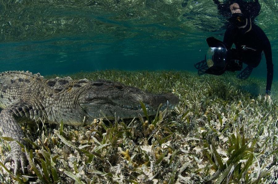 krokodilami-progulka-podvodnaya-eto-interesno-poznavatelno-kartinki_33536288
