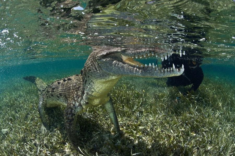 krokodilami-progulka-podvodnaya-eto-interesno-poznavatelno-kartinki_7047921819